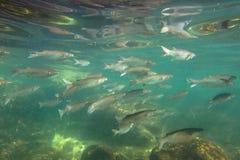 Espèce marine sous-marine Photographie stock libre de droits