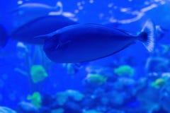 Espèce marine sous-marine Photo stock