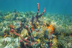 Espèce marine sous-marine avec beaucoup de couleurs Photo libre de droits