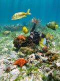 Espèce marine sous-marine colorée Image libre de droits