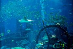 Espèce marine sous-marine dans l'aquarium Photos stock