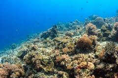 Espèce marine sur un récif coralien sain Photo libre de droits