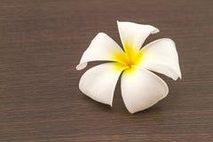 Espèces blanches et jaunes de Plumeria fleur sur en bois noir Images libres de droits