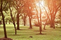 Espèces d'arbre en parc en Thaïlande Photo stock