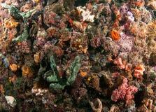 Espèces d'océan d'Atlanitc des poissons ou du corail Photographie stock libre de droits