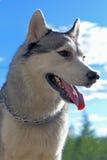 Espèces d'un chien du raccourci inférieur Photos stock