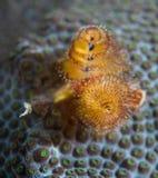 Espèces d'un Océan Atlantique d'animal marin. Photos stock