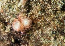 Espèces d'un Océan Atlantique d'animal marin. Photos libres de droits