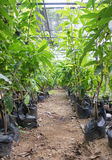 Espèces d'usine d'arbre diverses dans le jardin Photos libres de droits