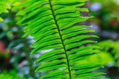 Espèces d'usine dans les forêts tropicales Image libre de droits