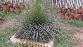 Espèces de cactus Photo stock