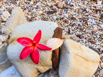 Espèces de Plumeria (fleurs de frangipani, arbre de Frangipani, de pagoda ou Te Photographie stock libre de droits
