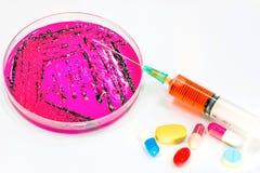 Espèces de salmonelles du plat de Salmonelle-shigella, le sang a été dessiné à Photos stock