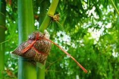 Espèces en bambou pour la consommation, greffe en bambou, greffe en bambou rencontrée Photo libre de droits