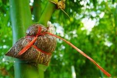 Espèces en bambou pour la consommation, greffe en bambou, greffe en bambou rencontrée Photos stock