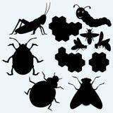 Espécie de insetos ilustração royalty free