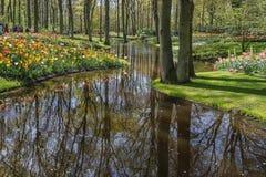 espécie Multi-colorida de campos de flor no parque Fotografia de Stock