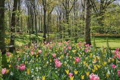 espécie Multi-colorida de campos de flor no parque Fotos de Stock Royalty Free