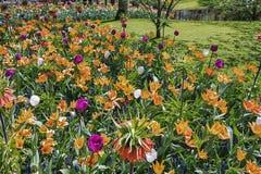 espécie Multi-colorida de campos de flor no parque Fotos de Stock