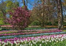 espécie Multi-colorida de flores no parque Fotos de Stock