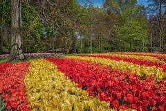 espécie Multi-colorida de flores no parque Fotos de Stock Royalty Free