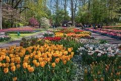 espécie Multi-colorida de flores no parque Imagens de Stock