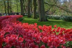 espécie Multi-colorida de flores no parque Fotografia de Stock Royalty Free