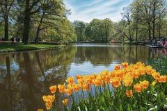 espécie Multi-colorida de flores no parque Imagem de Stock Royalty Free