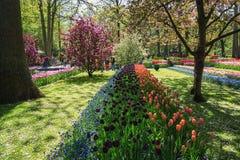 espécie Multi-colorida de flores no parque Foto de Stock Royalty Free