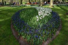espécie Multi-colorida de flores no parque Imagens de Stock Royalty Free