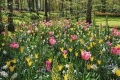 espécie Multi-colorida de flores no parque Foto de Stock