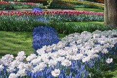espécie Multi-colorida de flores no parque Imagem de Stock