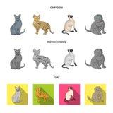 Espécie Siamese e outra As raças do gato ajustaram ícones da coleção nos desenhos animados, estoque liso, monocromático do símbol Fotos de Stock