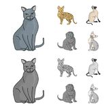 Espécie Siamese e outra As raças do gato ajustaram ícones da coleção nos desenhos animados, ilustração monocromática do estoque d Imagens de Stock Royalty Free