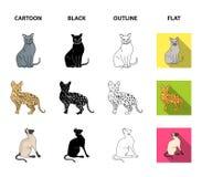 Espécie Siamese e outra As raças do gato ajustaram ícones da coleção nos desenhos animados, preto, esboço, estoque liso do símbol Foto de Stock