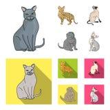 Espécie Siamese e outra As raças do gato ajustaram ícones da coleção nos desenhos animados, Web lisa da ilustração do estoque do  Imagens de Stock Royalty Free