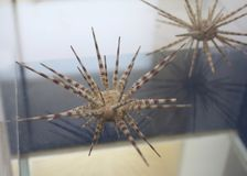 Espécimen biológico marino imagen de archivo