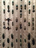 Espécimen del insecto Imagenes de archivo