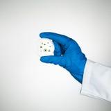 Espécimen del molde en placa de Petri imágenes de archivo libres de regalías