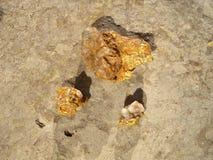 Espécimen del oro Imagen de archivo libre de regalías