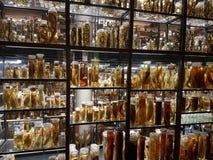espécimes Imagens de Stock