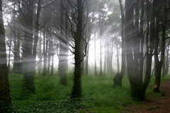 Espírito da luz Fotos de Stock