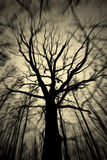 Espírito de uma árvore Foto de Stock Royalty Free