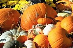Espírito do outono Imagem de Stock
