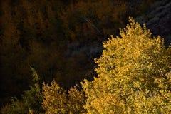 Esp in Lundy-Canion, Hoover-Wildernis, Siërra Nevada Range, Californië Stock Foto's