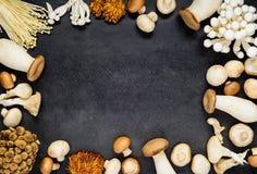 Espaço da cópia do quadro dos cogumelos foto de stock