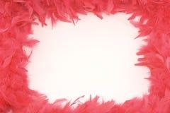Espaço das penas vermelhas isoladas Fotografia de Stock Royalty Free