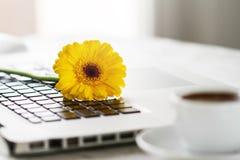 Espaço de funcionamento ou lugar de funcionamento com portátil, flores e café o Imagem de Stock