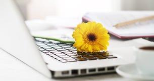 Espaço de funcionamento ou lugar de funcionamento com portátil, flores e café o Imagem de Stock Royalty Free