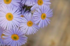 Espaço de madeira rústico da cópia do fundo do ramalhete de Violet Purple Daisy Chrysanthemum Chamomile foto de stock royalty free